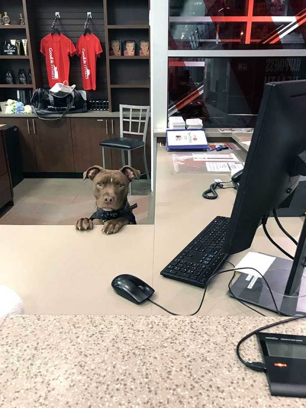New Worker At The Local Gym