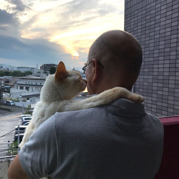 This Picture Was Taken Before Chip Died. His Cat Dad Took Him Out One Last Time To Enjoy What He Loved