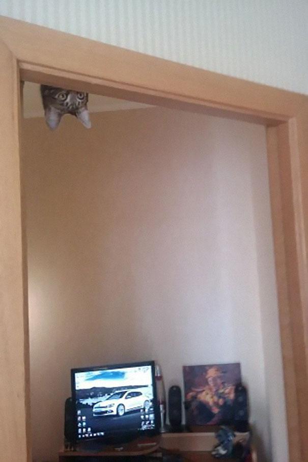 gatos-ninjas-6