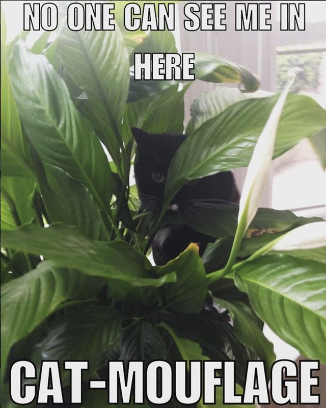 Cat hiding in plants