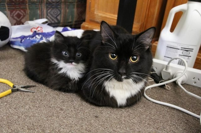 cat loaf with matching kitten loaf