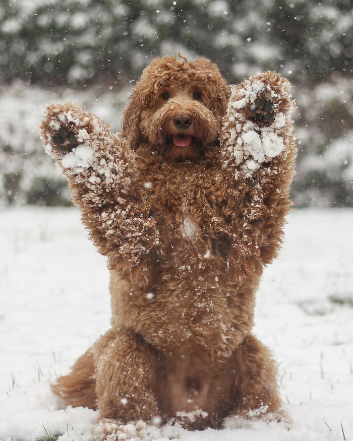 Who Has Four Paws And Loves Snow Days? This Guy!