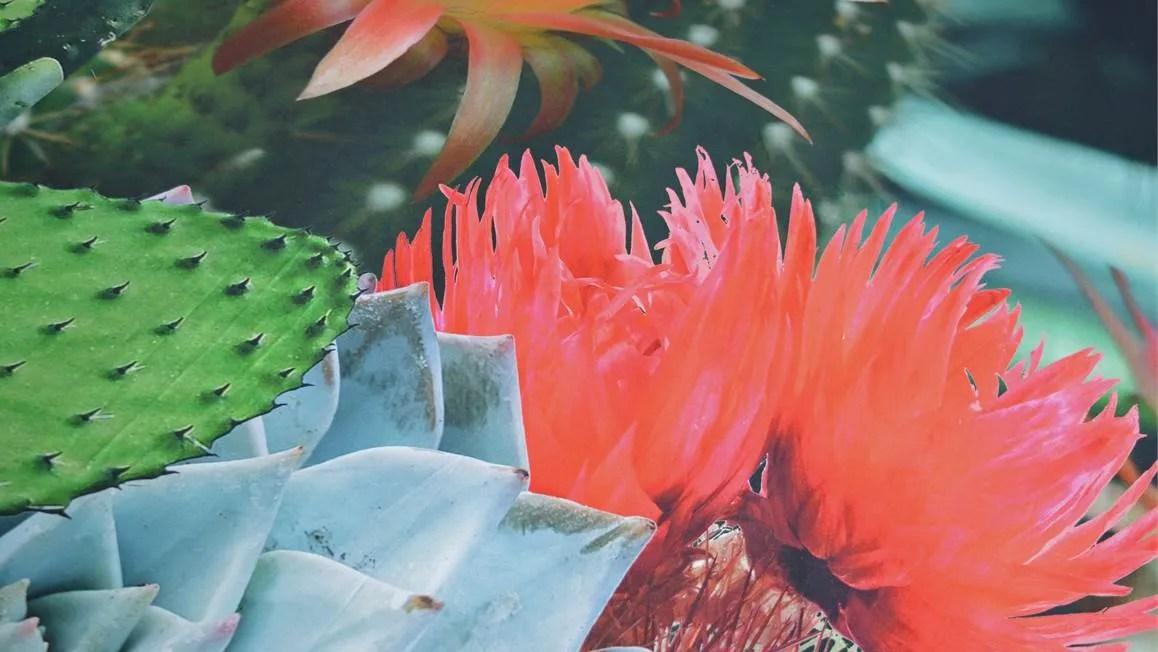 Snoozing Cactus dekbedovertrek  Multi  Smulderstextielnl