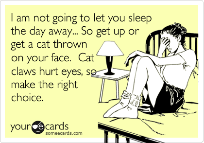 someecards.com - I am not going to let you sleep the day away... So get up or get a cat thrown on your face. Cat claws hurt eyes, so make the right choice.