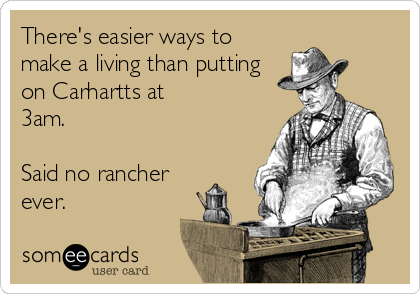 someecards.com - There's easier ways to make a living than putting on Carhartts at 3am. Said no rancher ever.