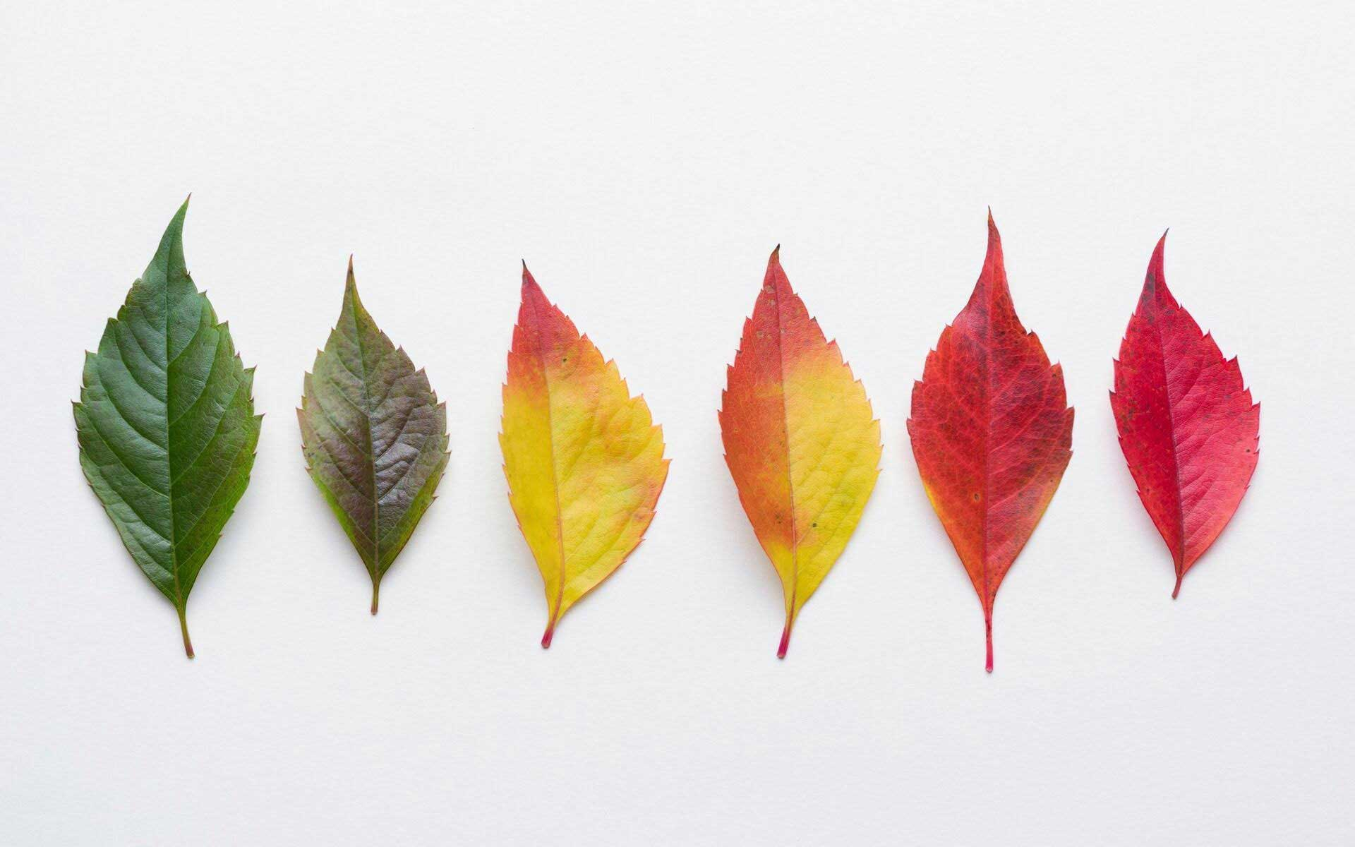 Why Do Leaves Change Color Fall Foliage Explained
