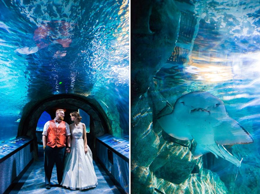 Newport Aquarium Wedding  Taylor and Adam  Lauren W