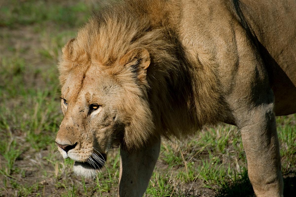 Tanzanian Animals part one  KITUNDU