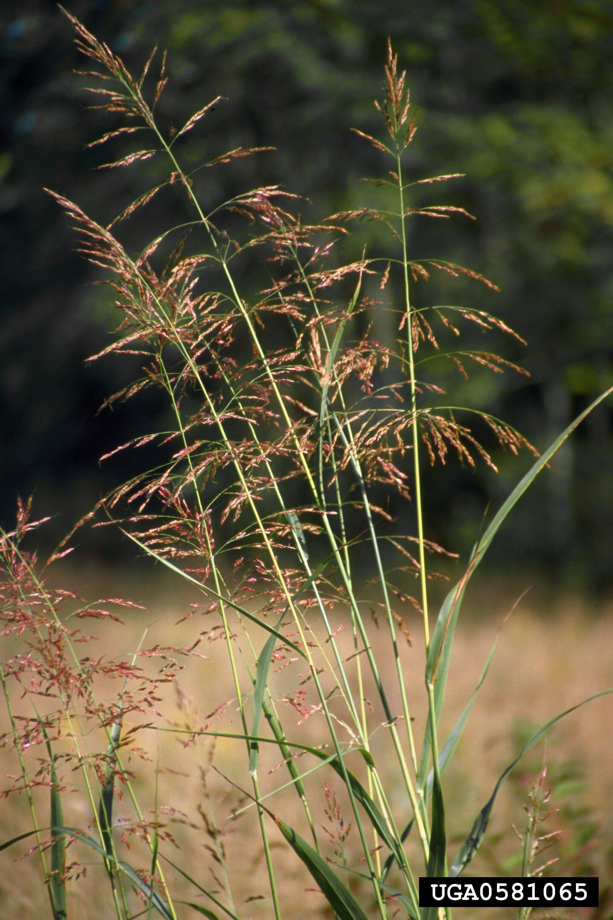 Black Lagoon  Invasive Plant Control  Aquatic Weed