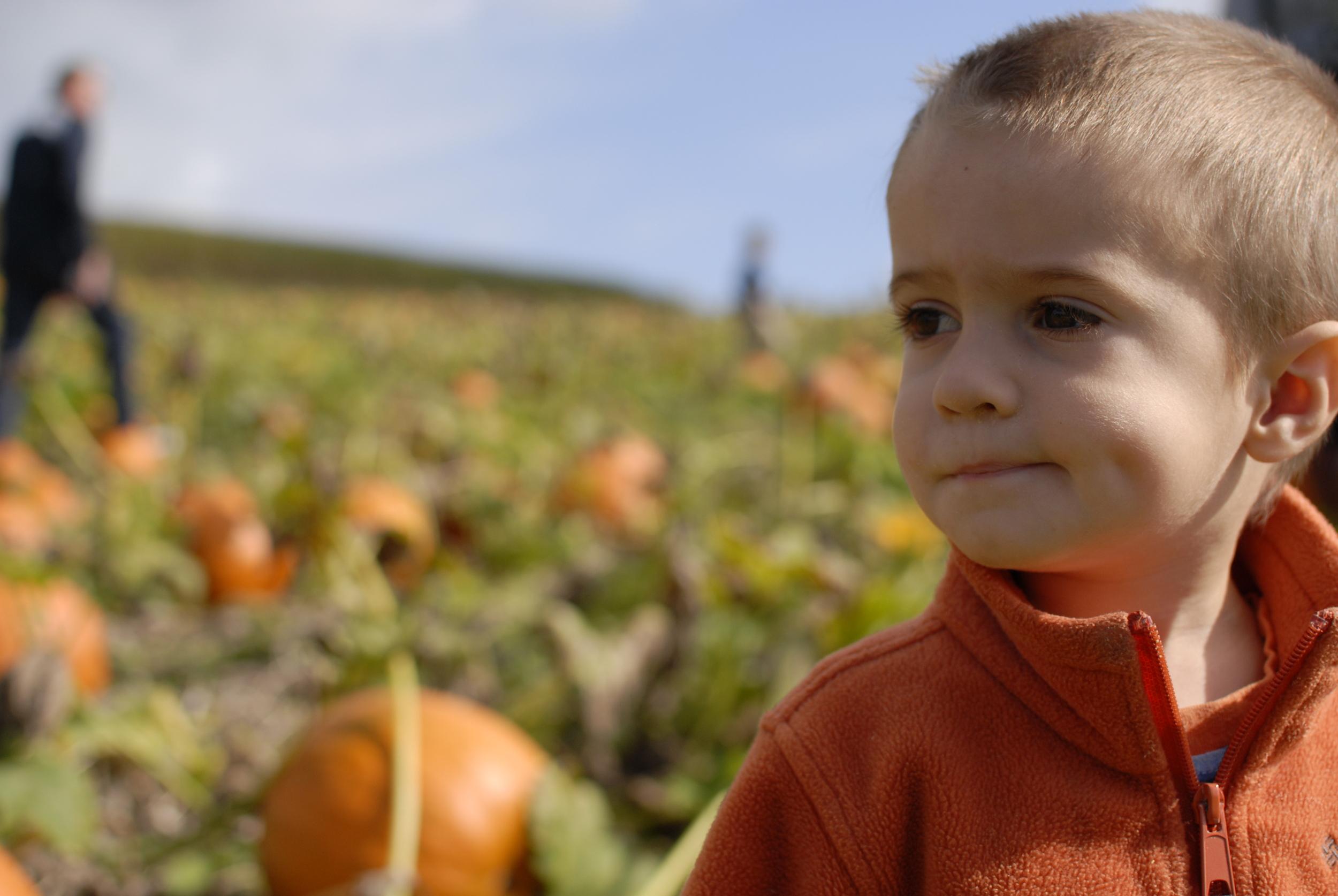 Oliver_pumpkin_patch