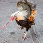 squirrelmounts