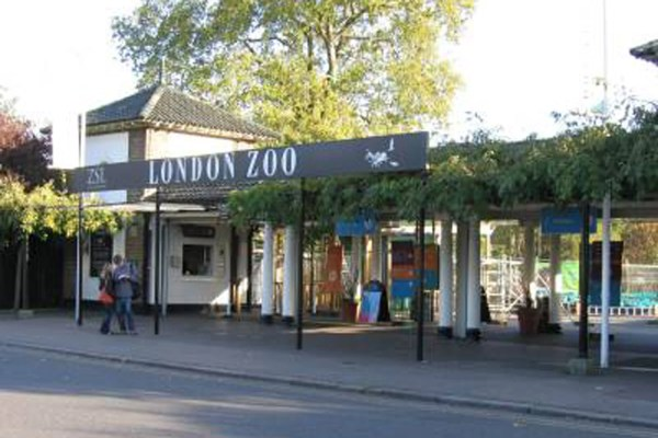 Disabled Visitor Suing London Zoo 300k Staff Member Allegedly Fractured Pelvis In