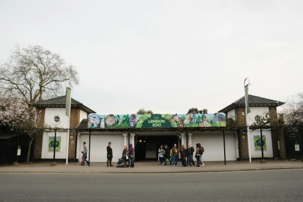 London Zoo' Plan '2am Outdoor Nightclub' Sparks