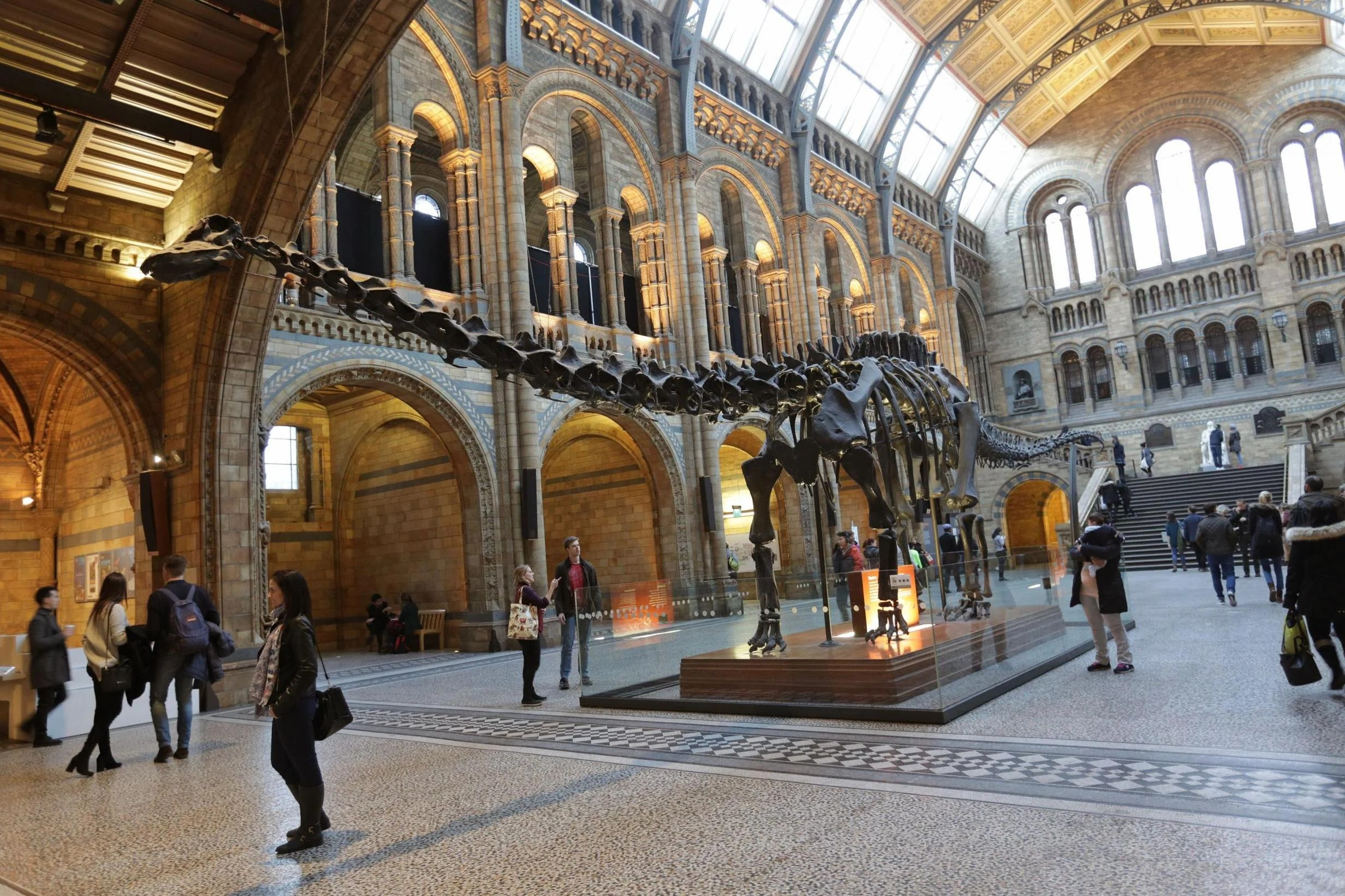 Natural History Museum bids farewell to Dippy the Diplodocus  London Evening Standard