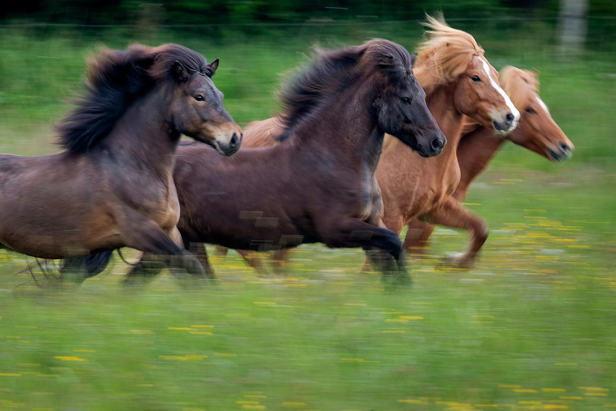 Fear And Mystery As Dozens Of Horses Across France Killed In Ritual Mutilations London Evening Standard