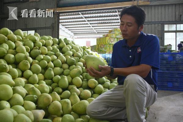 柚農哭了!中秋節后臺灣柚子滯銷退貨八千斤_國內圖文_看看新聞