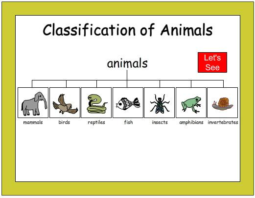 Classifying Animals Worksheet For Kindergarten