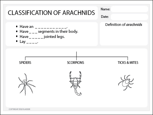 Arachnids Classification Worksheet