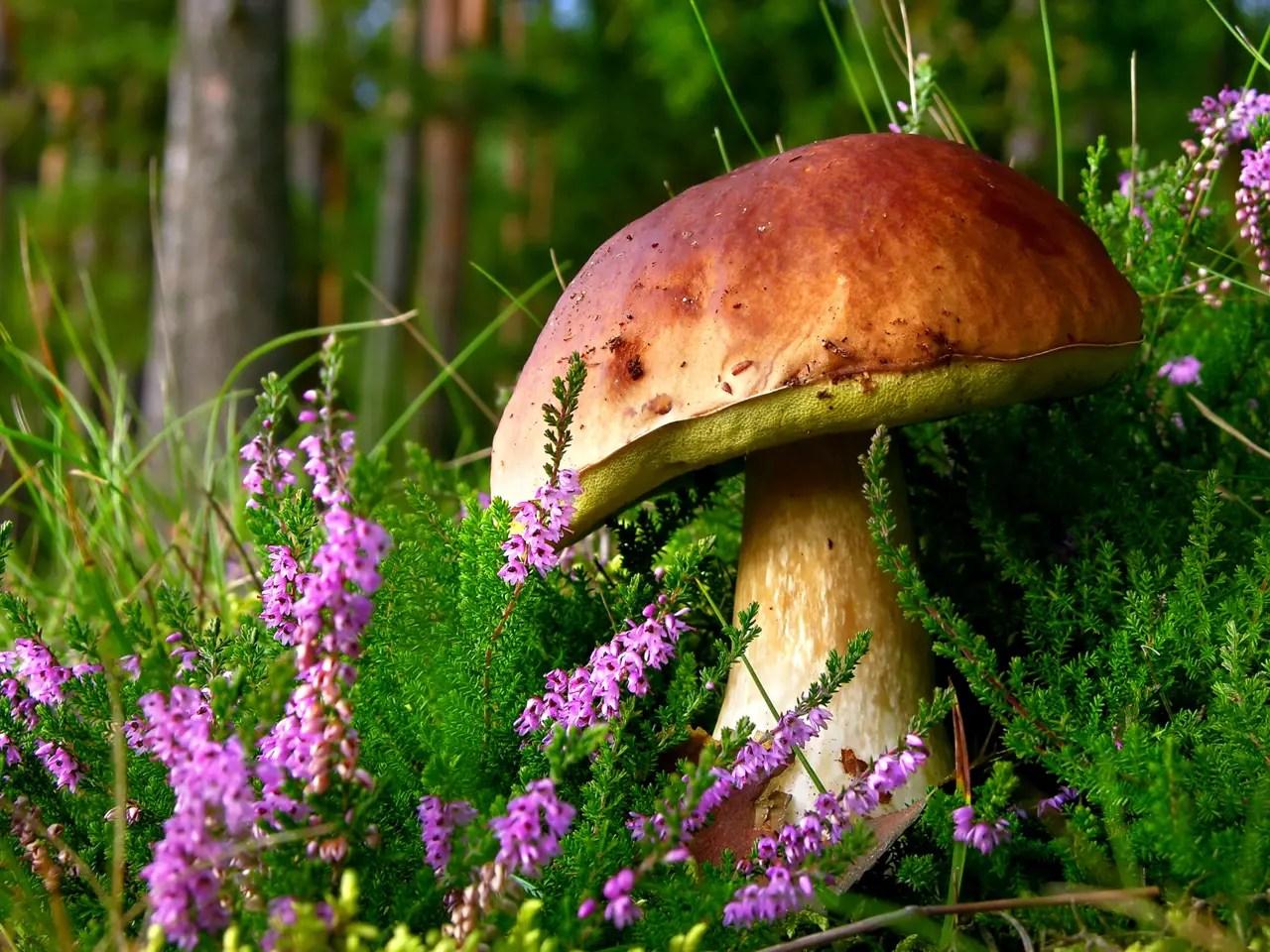 Raccolta funghi in Alto Adige