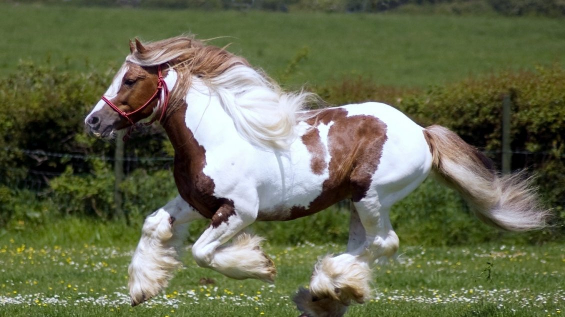 Cute Wallpapers For Girls Unicorns Beautiful White And Brown Horse Running On The Field