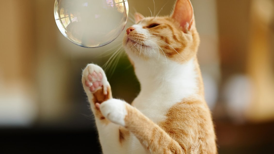 Cute White Dogs Wallpapers A Sweet Yellow Cat Playing With A White Bubble