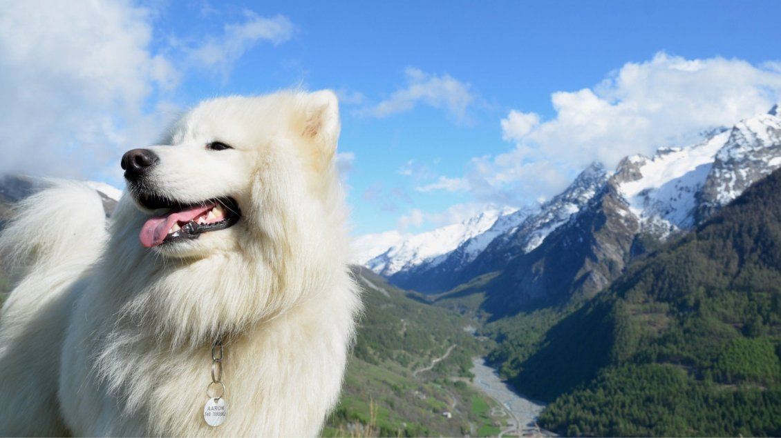 Happy Valentines Day Cute Wallpapers Beautiful White Dog In Mountains Fluffy Dog