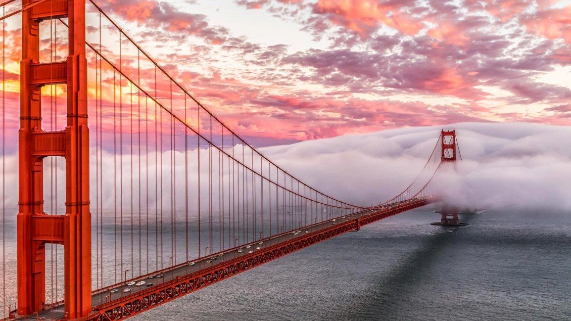Cute Cats Wallpapers Download Golden Gate Bridge In Fog In San Francisco