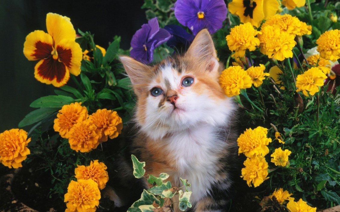 Cute Sweet Baby Hd Wallpaper Sweet Cat Between Flowers In A Garden