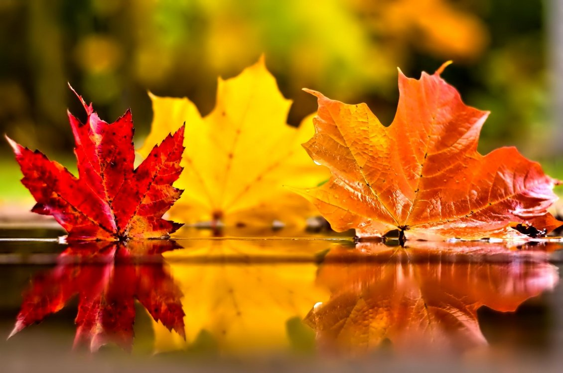 Free Cute Fall Wallpapers Three Coloured Autumn Leaves In The Mirror Of Water