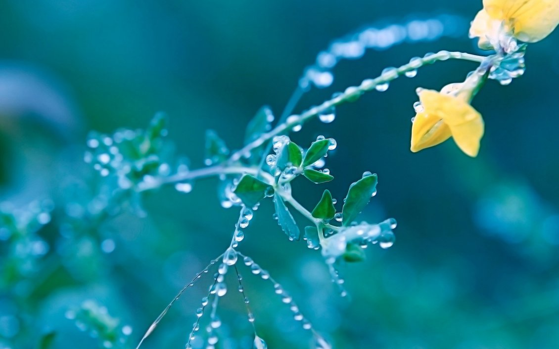 We'll walk you through the steps for how to make one on desktop. Macro wallpaper - yellow flower full with water drops