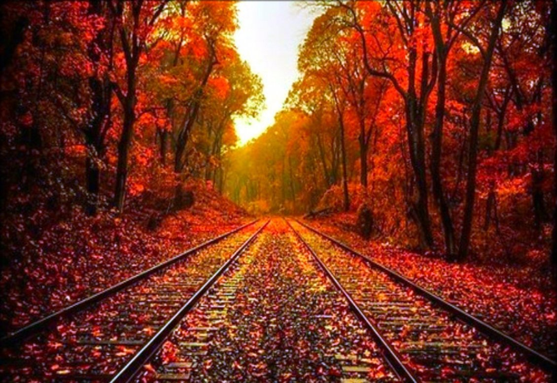 Autumn Falling Leaves Live Wallpaper Autumn Leaves On The Rails Hd Wonderful Wallpaper