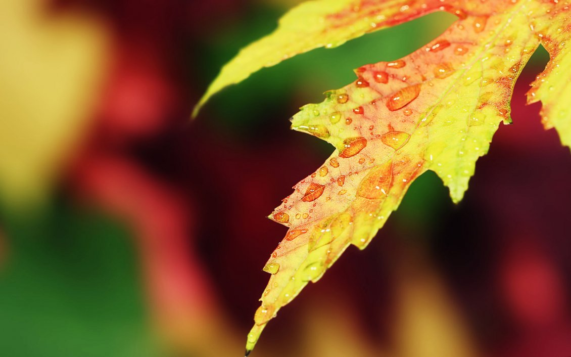 Fresh New Fall Hd Wallpapers Macro Water Drops On A Yellow Autumn Leaf Hd Wallpaper