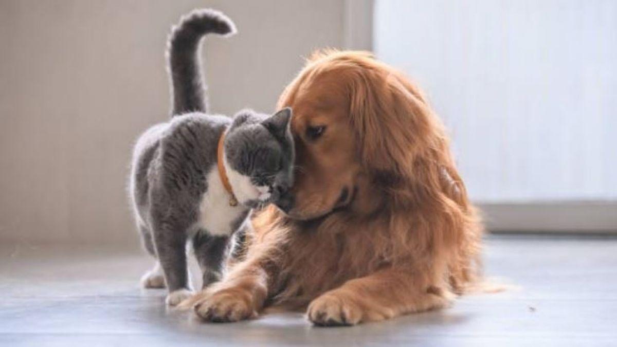 Resultado de imagen para perros y gatos