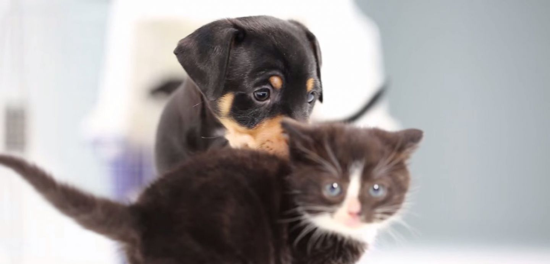 VIDEO Alerta de ternura Cachorros de gatos y perros se