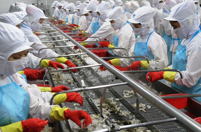 It is not easy for local seafood enterprises to expand their exports in the market because of the quota for Vietnamese shrimps which will be enjoying the tax exemption. Photo: Bloomberg
