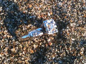 Steph's heirloom engagement ring