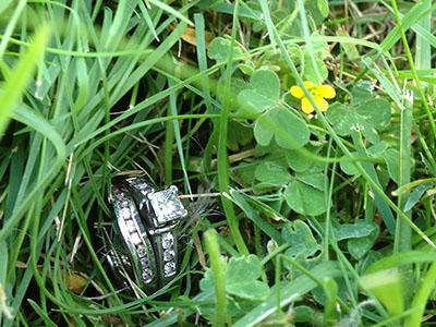 Nina-grass
