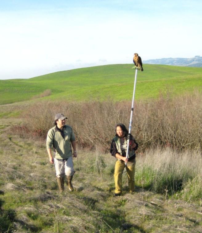 eric n andrea n harris hawk hunting near petaluma Med 1-11-15