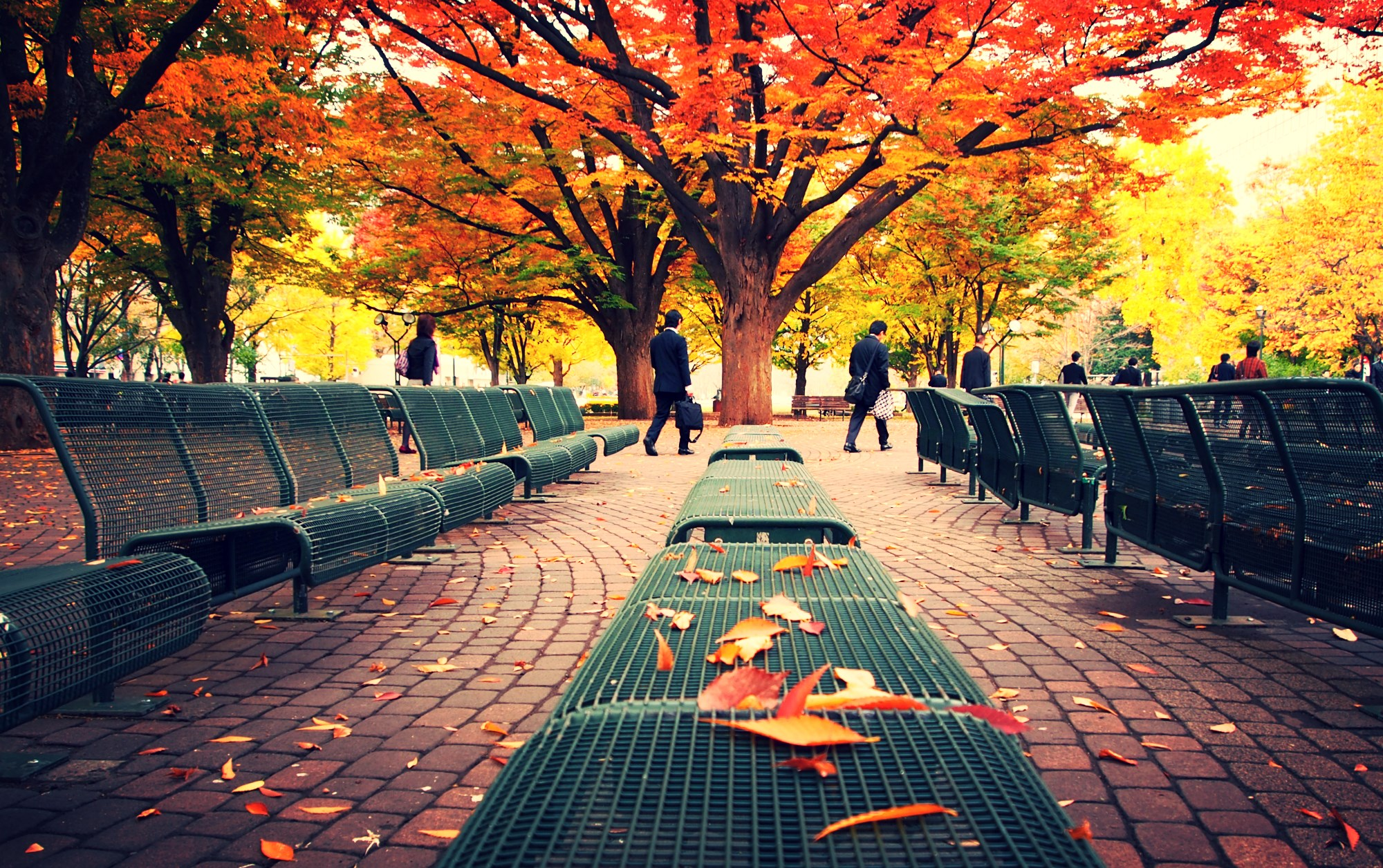 Wallpaper Fall Weather Odori Park Urban Park In Sapporo Thousand Wonders