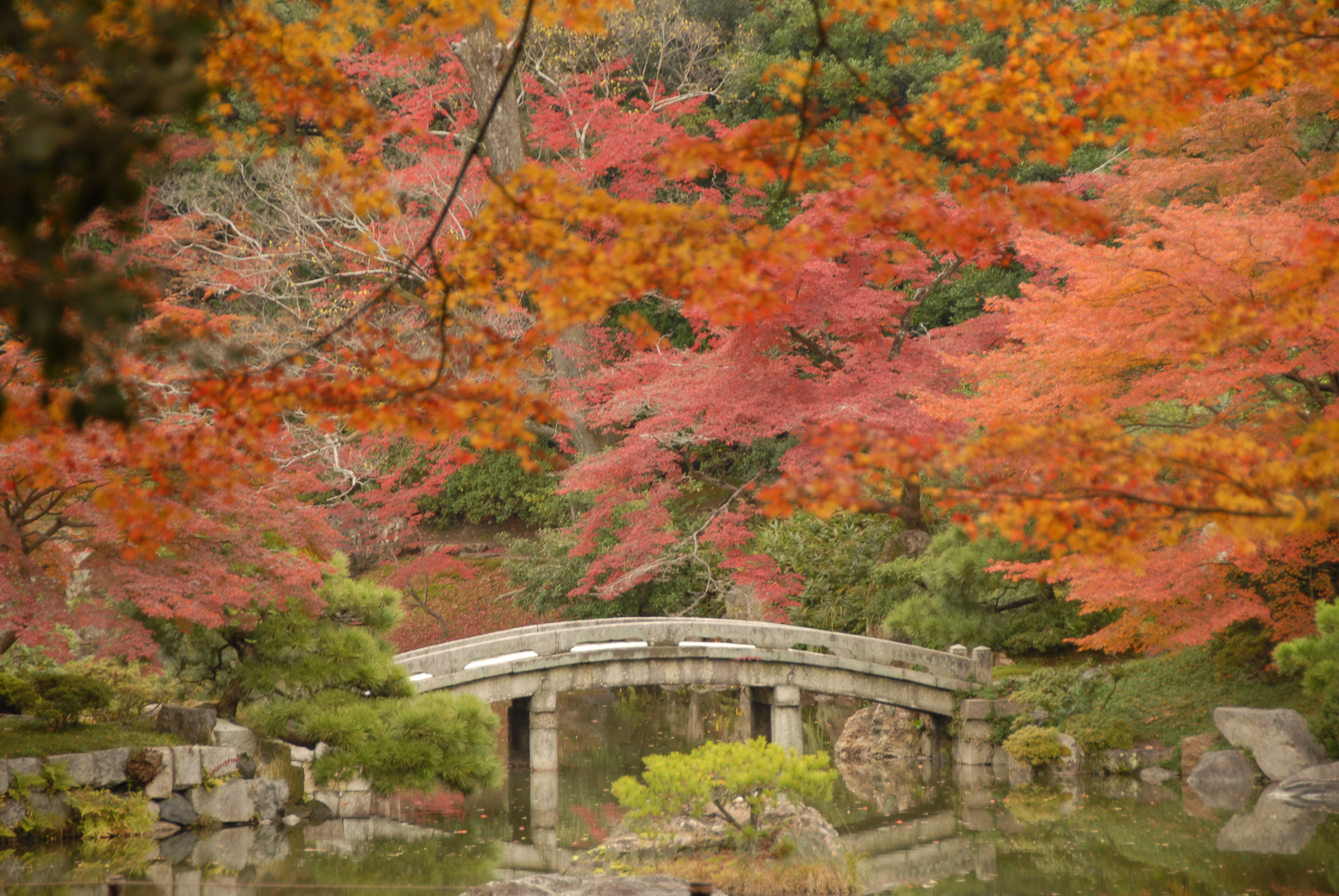 November Fall Wallpaper For Computer Sentō Imperial Palace Botanic Garden In Kyoto Thousand