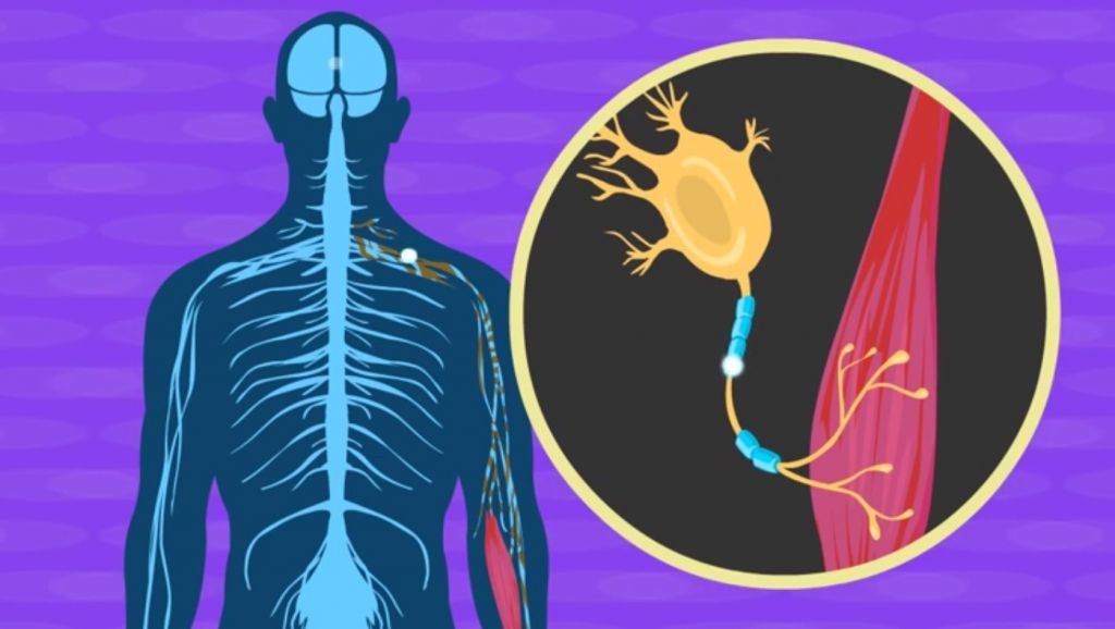 Israeli scientists announce new treatment for ALS | The ...