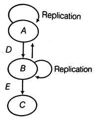 DNA Replication- Mechanism and Enzyme Involved in DNA