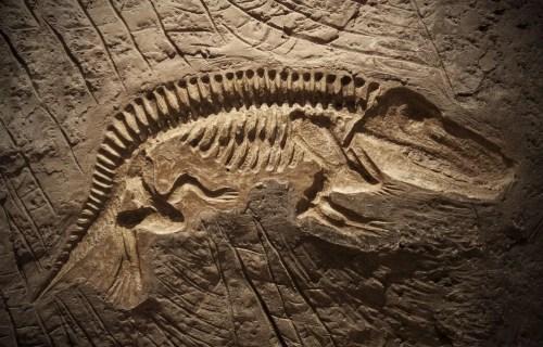 O que são Fósseis
