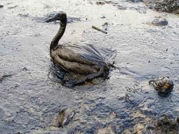 Derramamento de petróleo