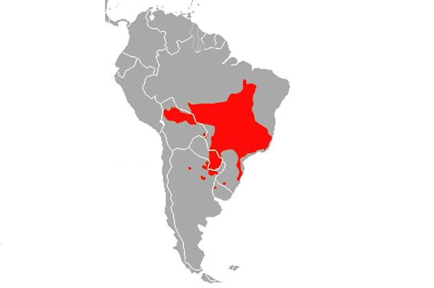 Distribuição geográfica do lobo guará