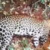 wildlife in rare brutality