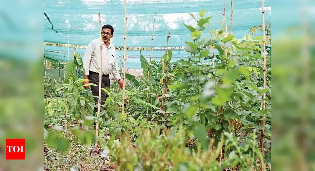 Create dense, native forests using one of the pioneering methods of forest creation in the world, combined with the experience and expertise of afforestt. Miyawaki Forest Miyawaki Forest The Cool Spot In The Concrete Jungle Kochi News Times Of India