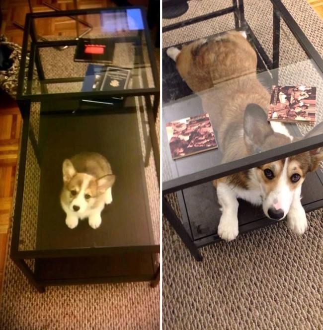 antes-e-depois-cachorros-15