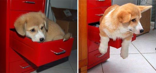 antes-e-depois-cachorros-18