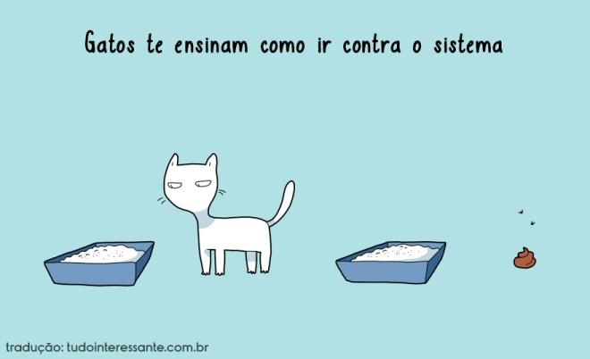 beneficios-gatos-3